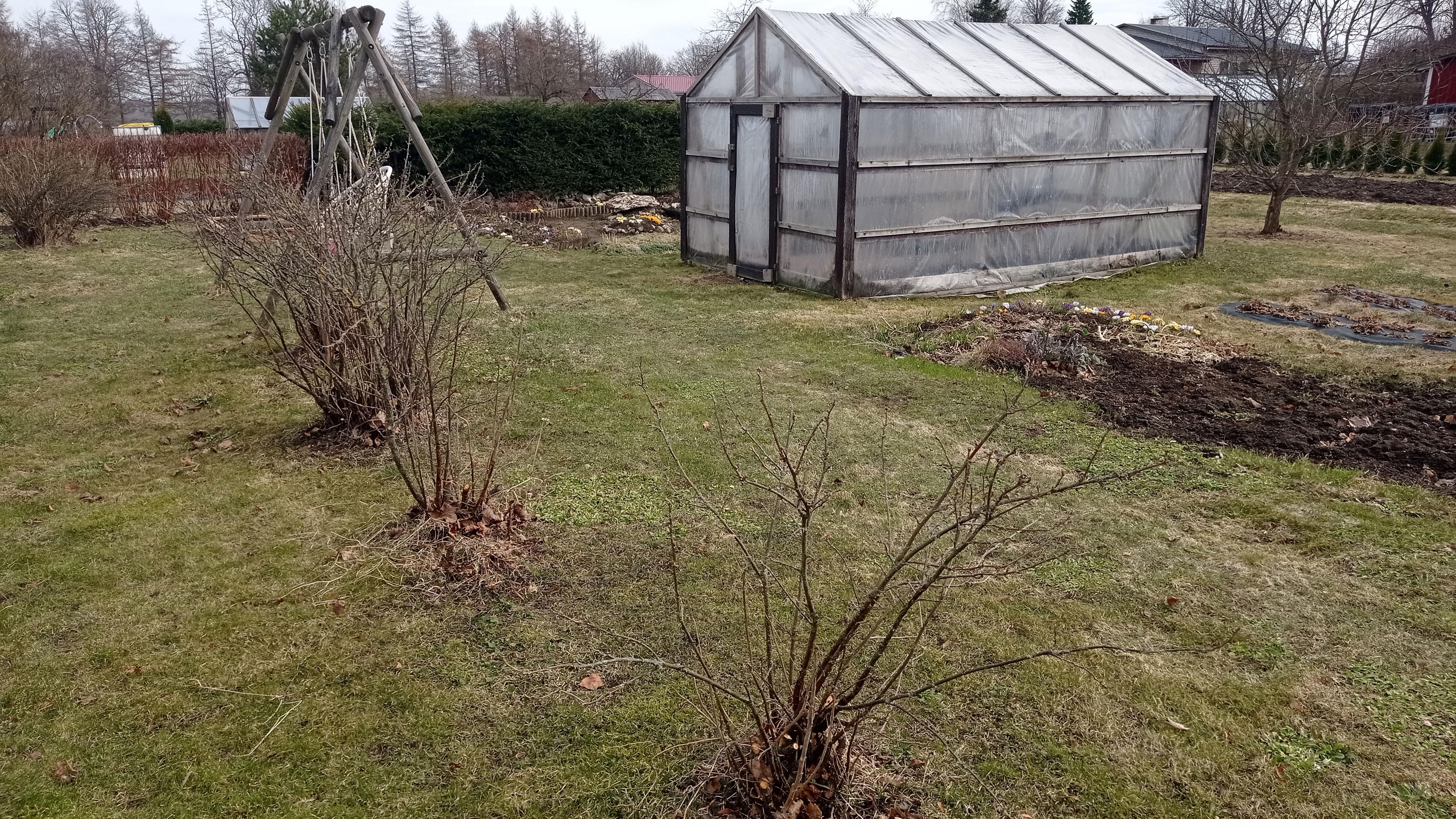 Milliseid töid teha aprillis aias ja peenramaal